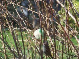 Album - Oiseaux
