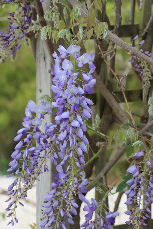les fleurs du jardin en avril