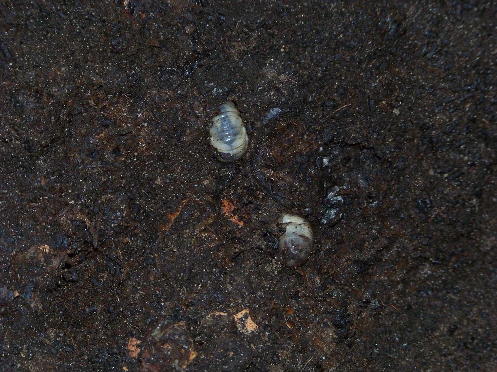 divers insectes du jardin