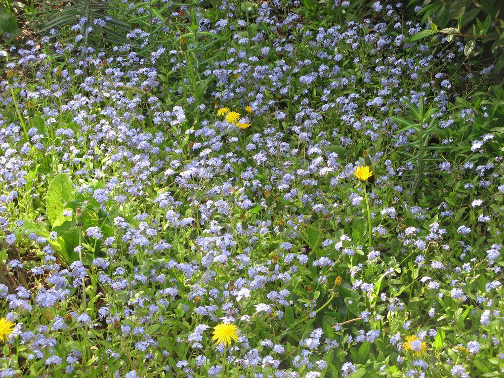 L'histoire de notre jardin, de notre potager à travers de jolies photos