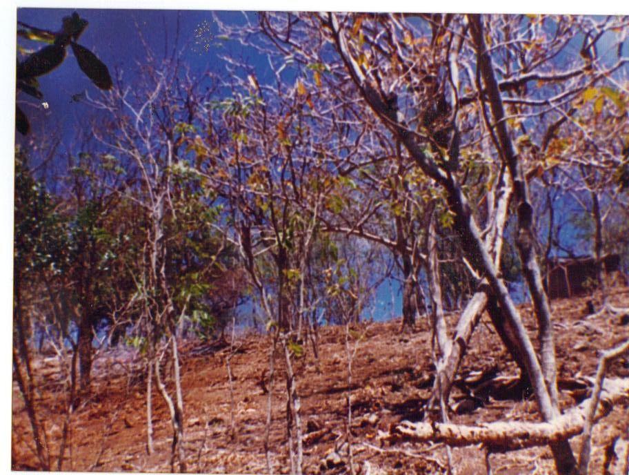 proprieté de 3hectares située au sud de terre de haut vues superbes sur la dominique marie galante et les iles de la coche,la redonde,les augustins et le grand ilet &#x3B;acces-sentier 1,5 km durée du parcours 30 minutes depart anse rodrigue.