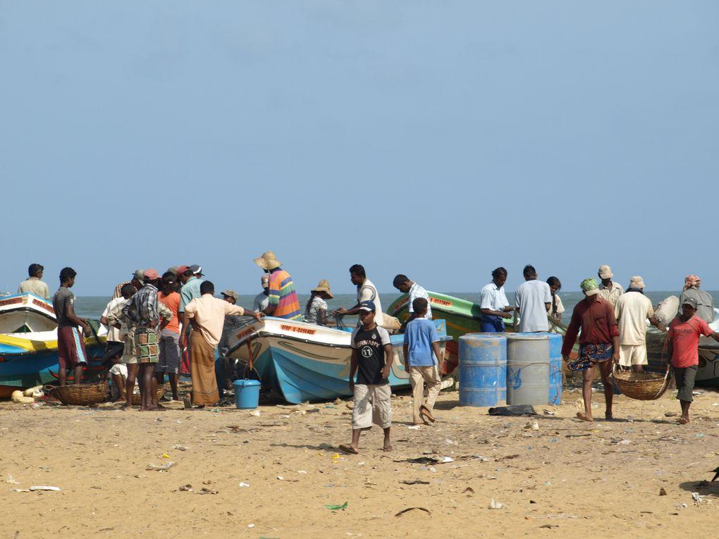 Album - Galerie 7 - Le marché aux poissons de Négombo