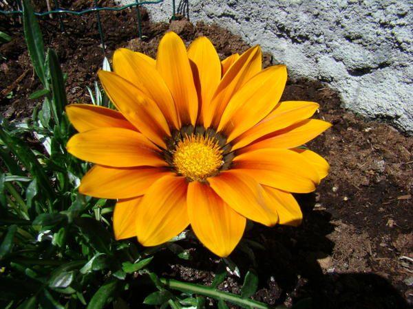 la flore de la savoie