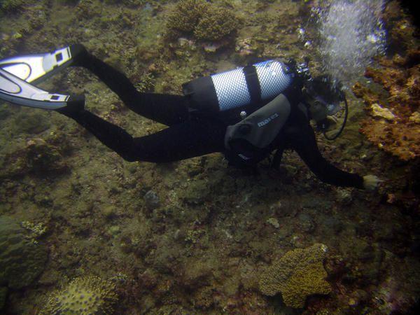 la plongée sous-marine et la faune de l'océan indien à l'île de La réunion