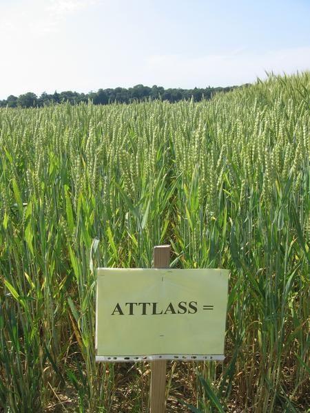 Les agriculteurs étaient invités à découvrir l'agriculture biologique chez François Mellon, qui a converti une partie de ses terres en bio depuis 8 ans....