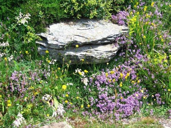 Fleurs rencontrées en Ardèche