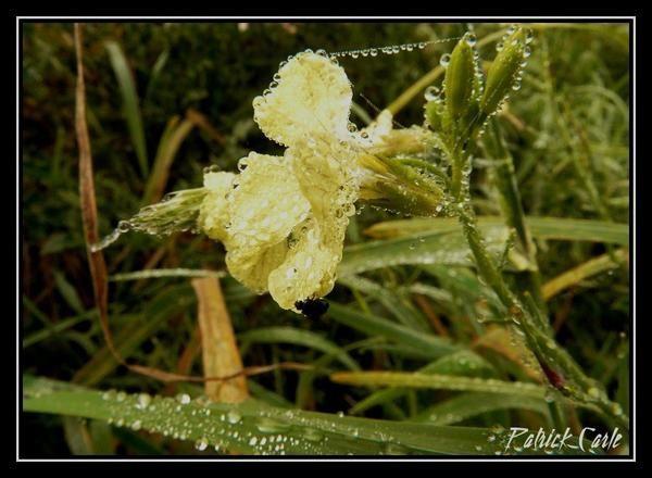 rosée,pluie,sur insectes et plantes