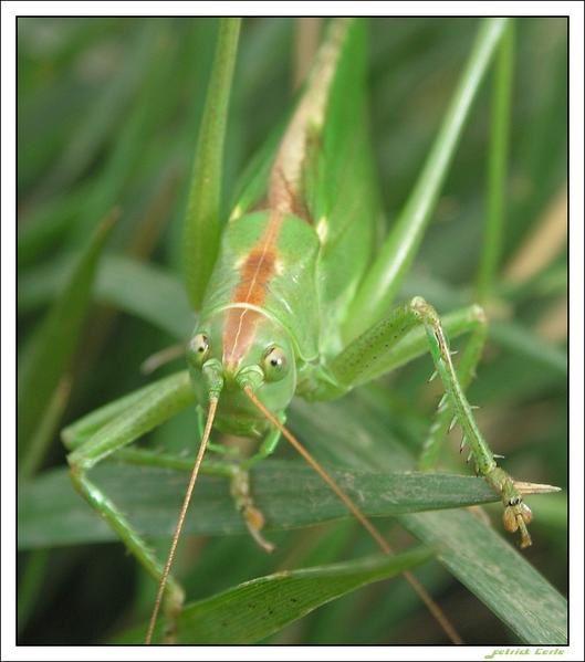 insectes des campangnes et de mon jardin