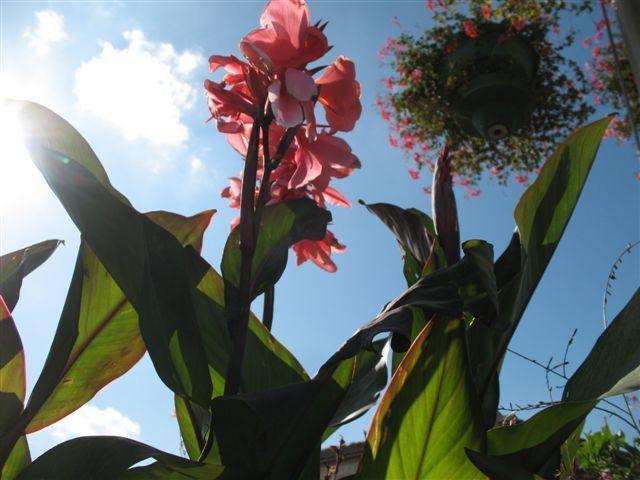 Nos Jardiniers, à Matha, sont formidables ! Les photos ont été prises juste avant les premières gelées du 15 octobre.