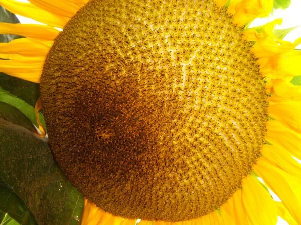 Album - Nature fleurs et insectes