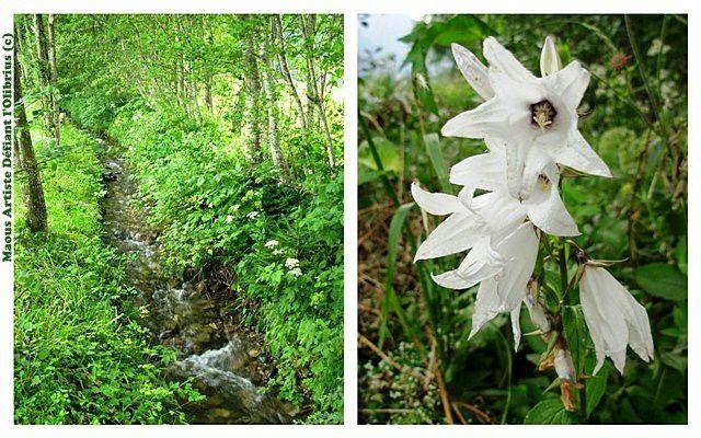 La faune et la flore des Alpes tyroliennes.
