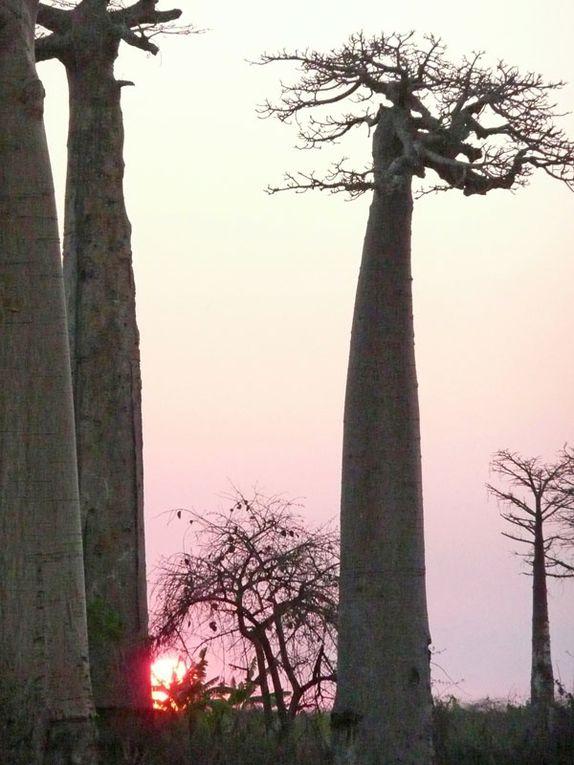 Album - Madagascar 2008