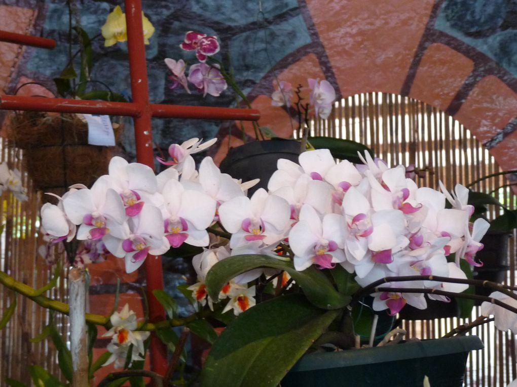 Exposition d'orchidées à la Ferme Perrine, Lamentin, Martinique