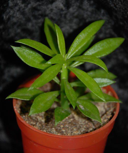 Mes plantes dans tous leur états