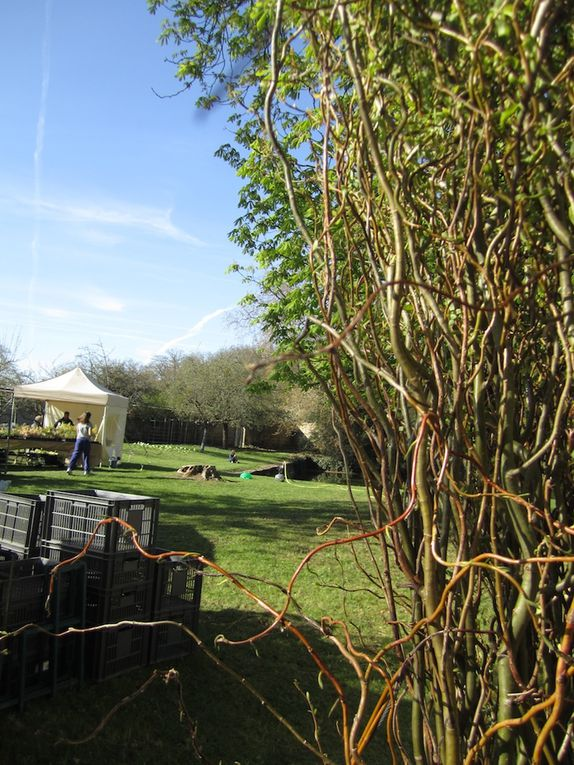 Fêtes des plantes vivacesdimanche 1er avril 2012OMTombarello