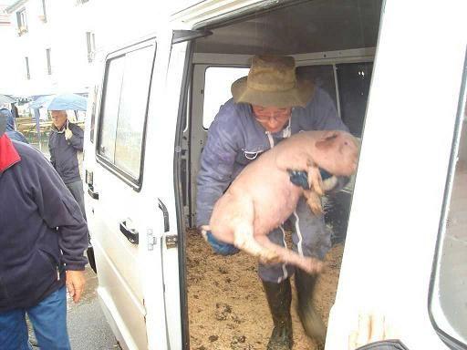 Courses des petits cochons ruaux 88370