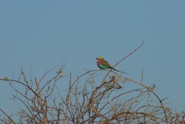 Album - Oiseaux - Afrique