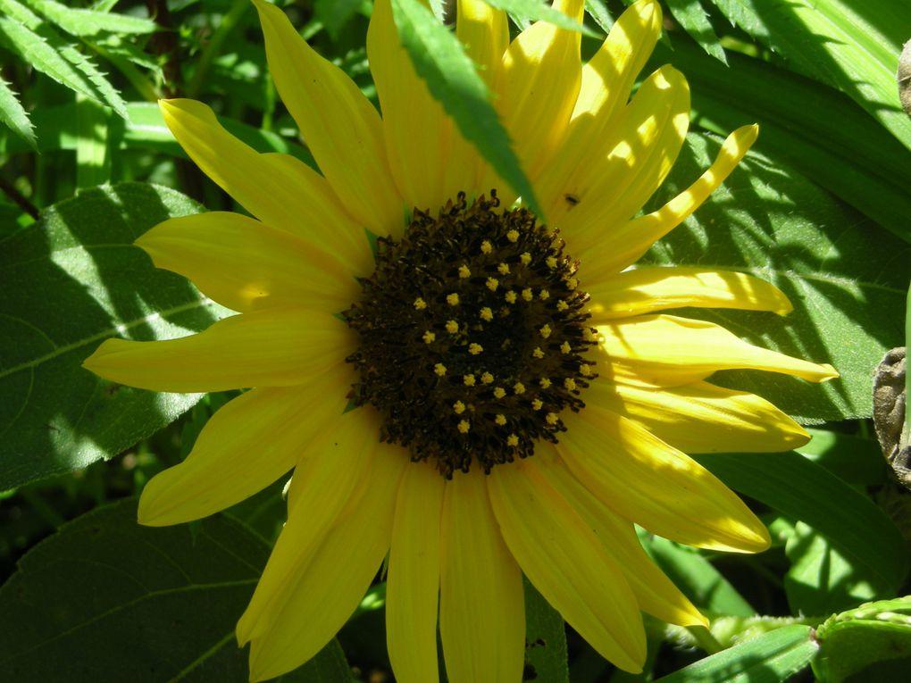 j'adore les fleurs! : voici des photos prises près de Naggar en 2007