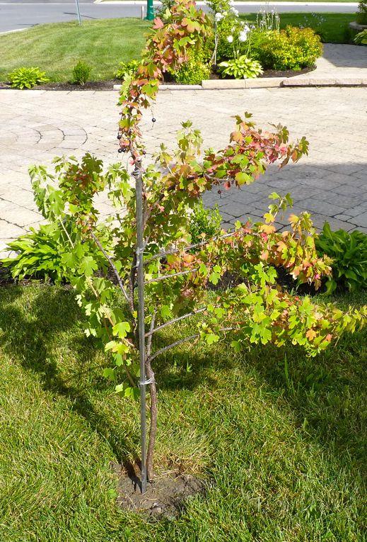 Album - Mon jardin été 2010