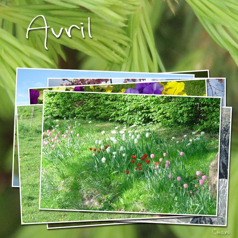 Album - 04 ~ Avril