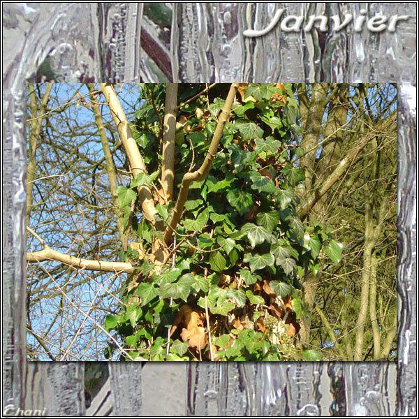 Album - 01 ~ Janvier