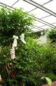 La Sologne : Orléans/Parc floral de la source/Rando à Vernou en Sologne/Beaugency/Blois