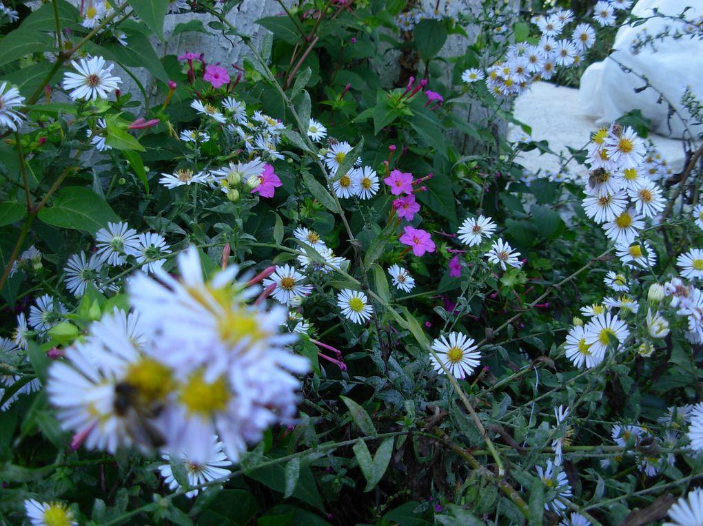 Album - A-oct.10-fleurs