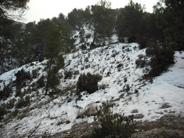 Photos prises dans les Alpilles (au nord de Saint-Rémy) le samedi 10 janvier 2009 .
