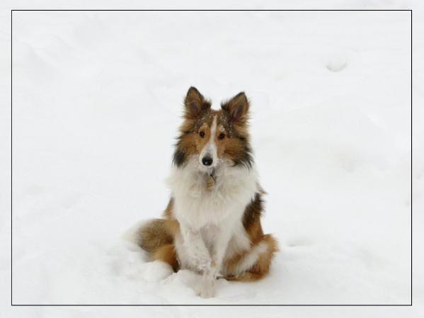 Mon chien Merlot, né le 29 mai 2007.