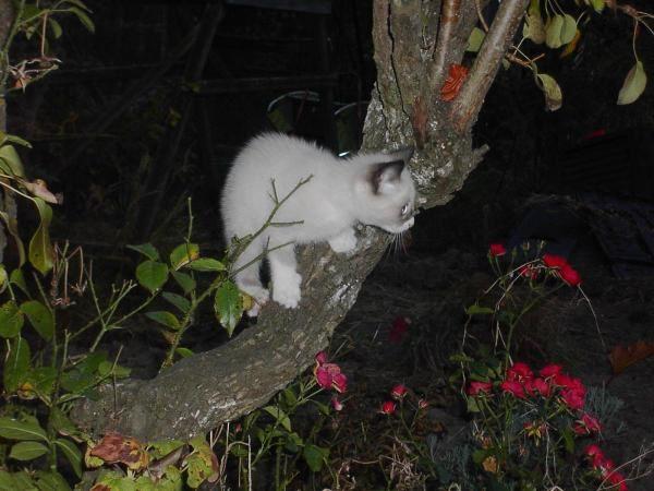 Album - Des-images-du-chaton