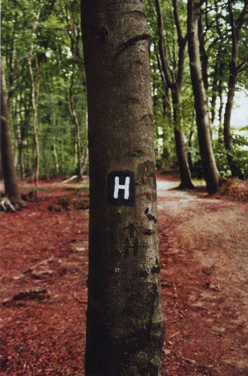 Der Hermannsweg ist einer der bekanntesten Wanderwege Deutschlands und verläuft als Kammweg des Teutoburger Waldes von Rheine bis hinauf auf den Lippischen Velmerstot. Wir sind ihn im August 2009 in zwei Tagen von Hoerstel bis nach Hilter gelaufen.