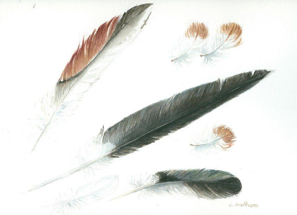 Album - Aquarelles,plumes-coquillages