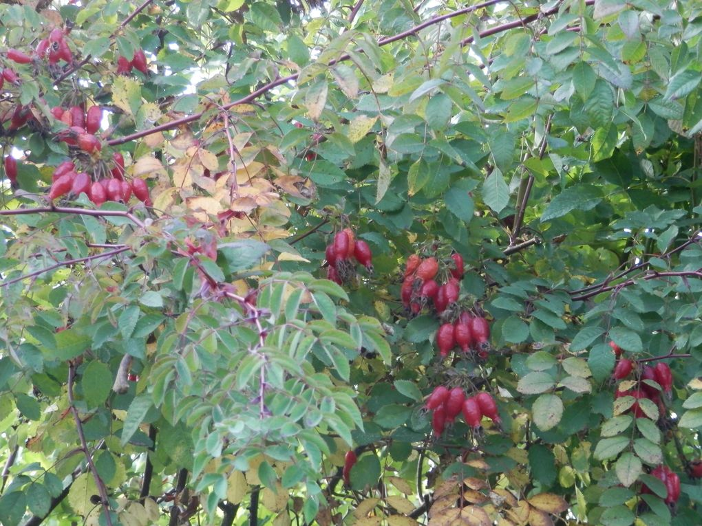 Album - Jardin-de-Roquelin en automne