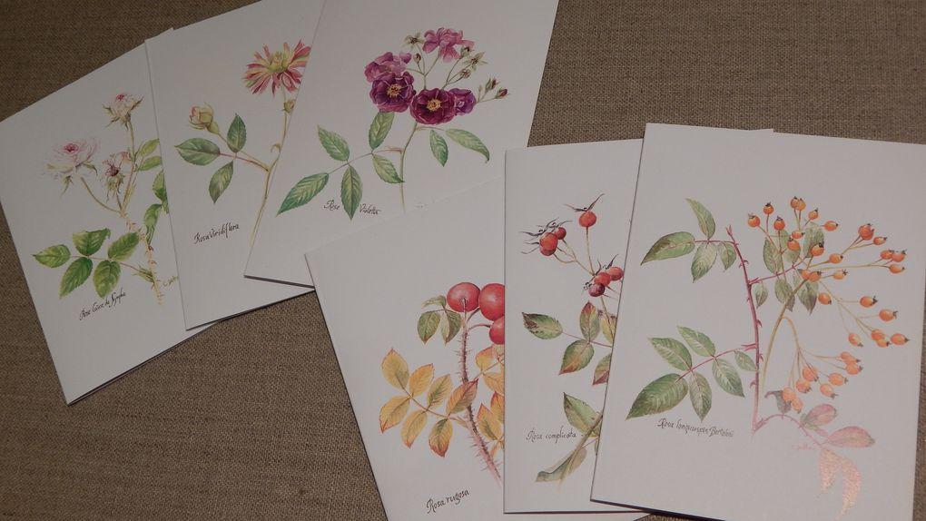 Cartes doubles(roses et baies), ou cartes simples 5€ les 6 e. + port.