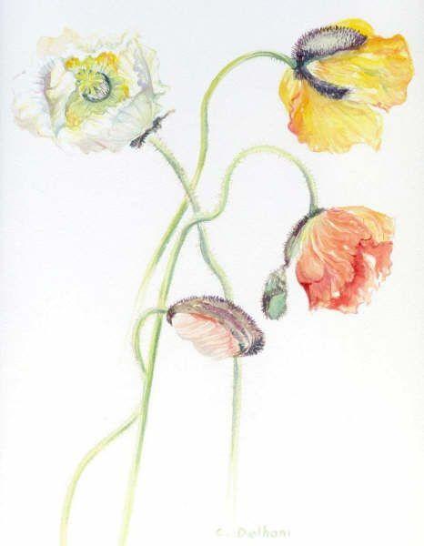 aquarelle sur papier arches grain fin ou satiné 300 gr/m2