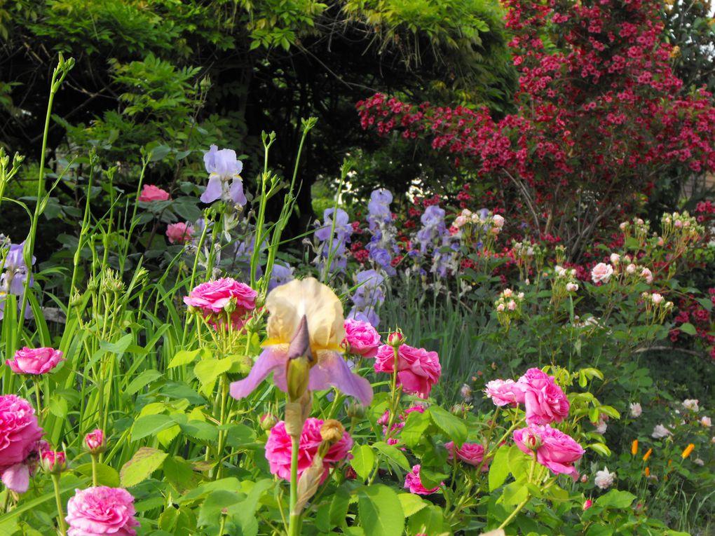 Album - mon jardin au printemps