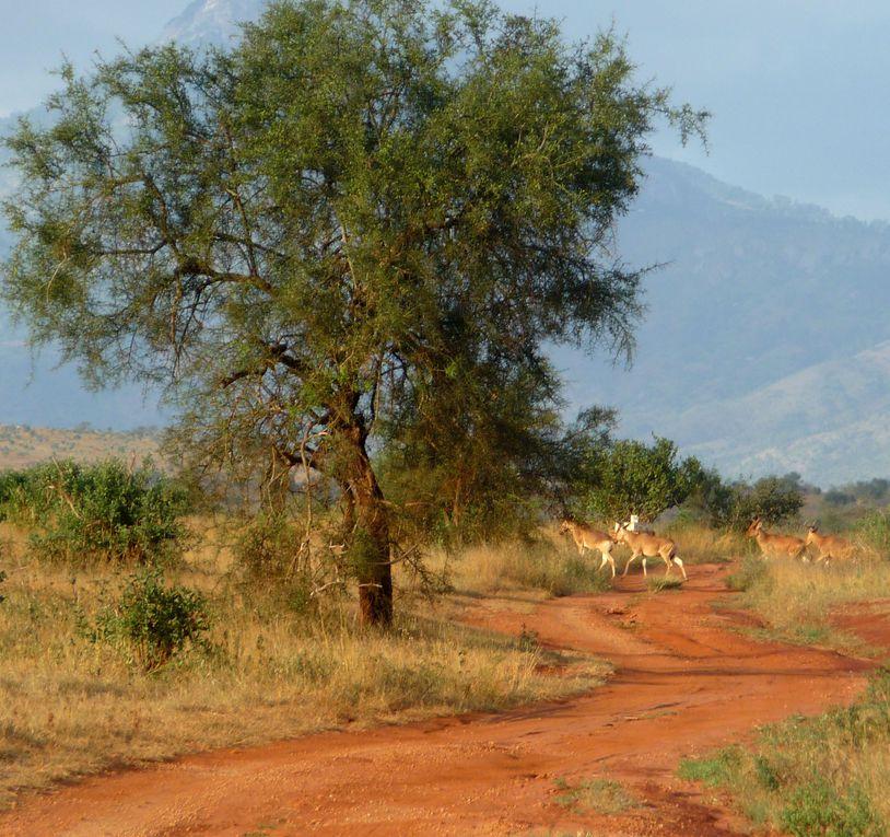 Album - KENYA : Paysages