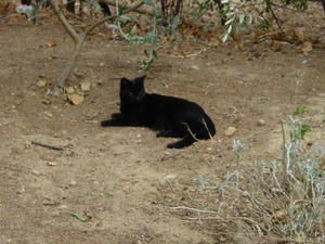 O'MALEY ET SA COMPAGNIE etLes chats noirs