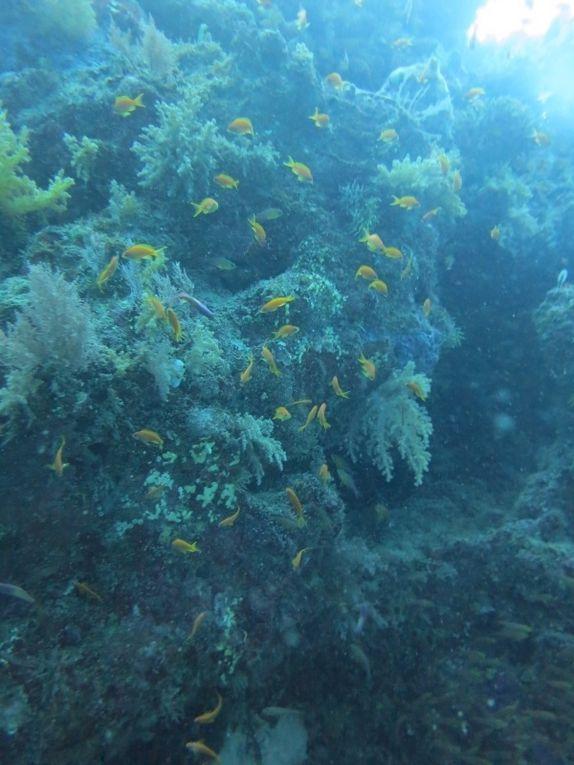 Plongée dans la passe en S à Mayotte le 1er avril, ça il y avait des poissons, si si, mais aucune farce&#x3B;-)
