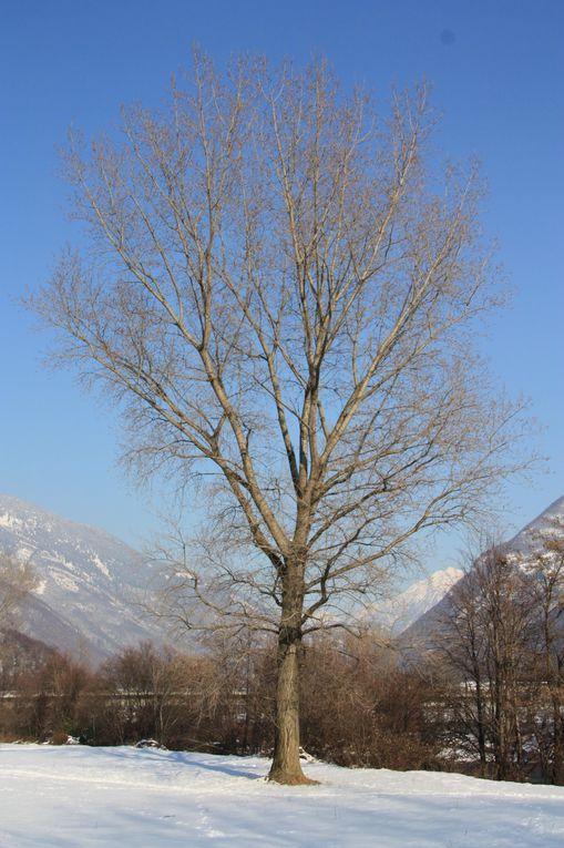 Album fotografico della passeggiatina pomeridiana lungo la golena sinistra del Ticino.