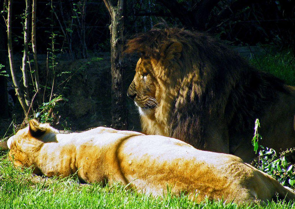 Balade au Zoo d'Amnéville, en Moselle, par une belle journée de septembre...
