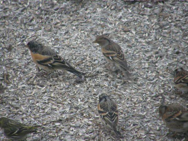 Quelques oiseaux de nos régions