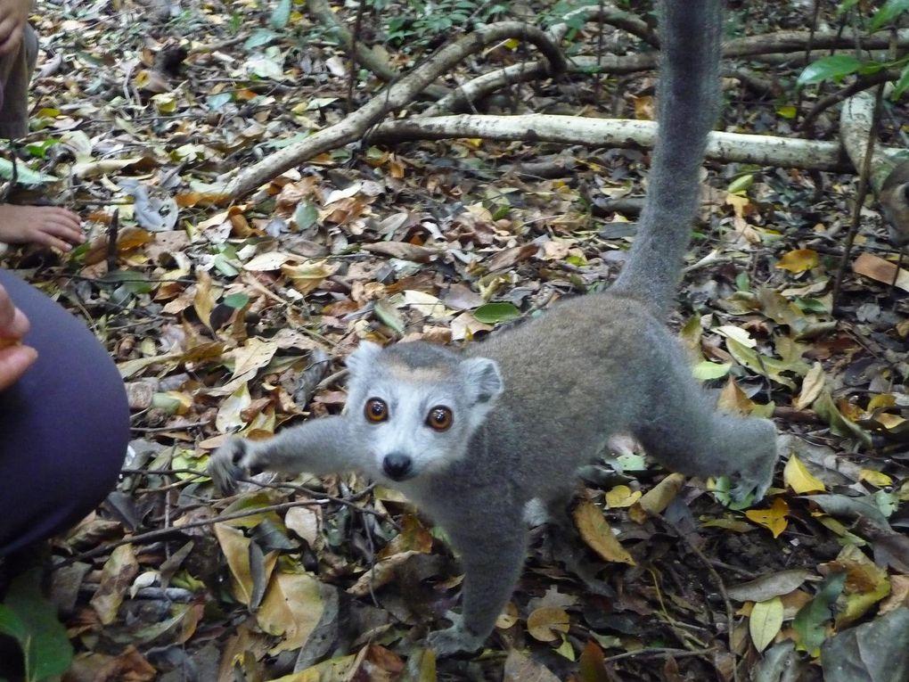 vacances dans le Nord de Madagascar
