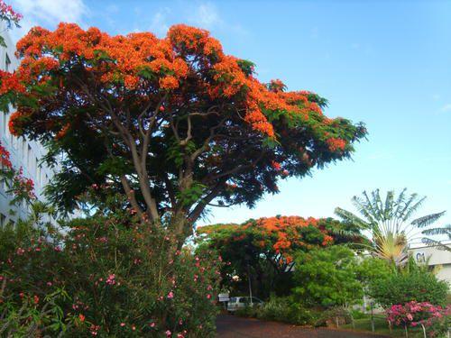 Photos d'arbres.