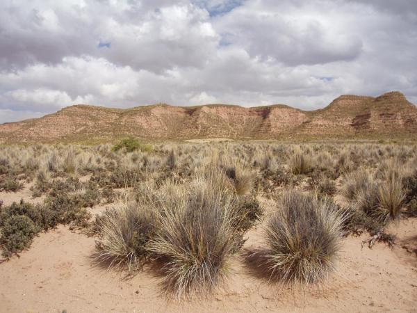 desert de bolivie, le salars et le passage en argentine