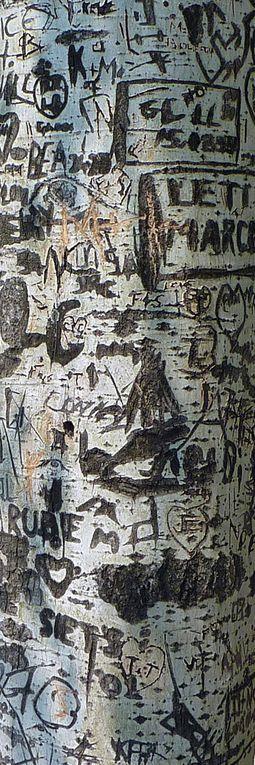 Album - hieroglyphes