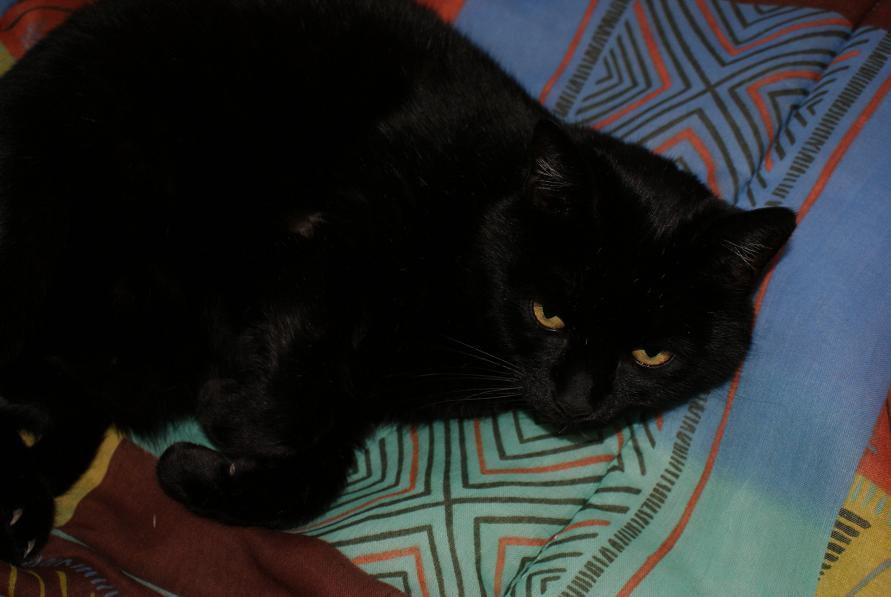 Les chats de la maison, de l'entourage,inconnus...