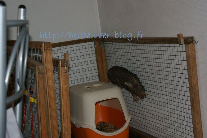 Ma nouvelle lapine arrivée le 20-10-2011 dans ma vie