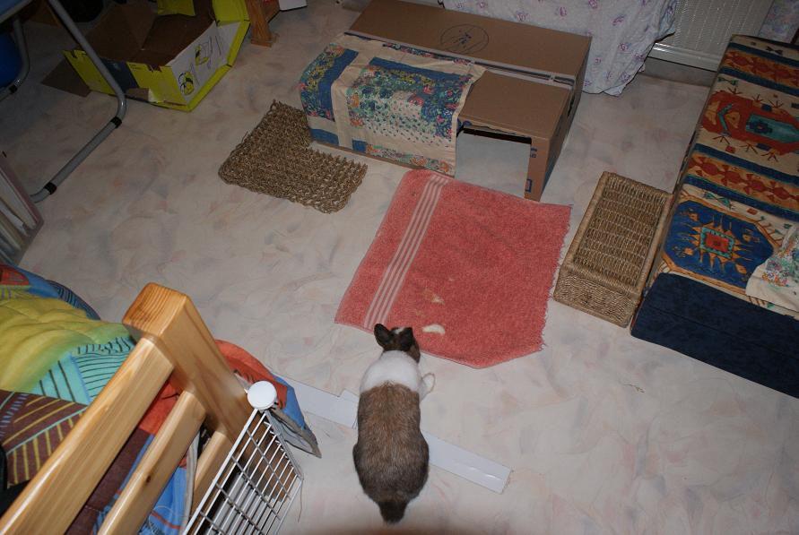 Des photos de Toupie mais aussi de mes deux lapins décédés : Chocolate et Mouchoir.