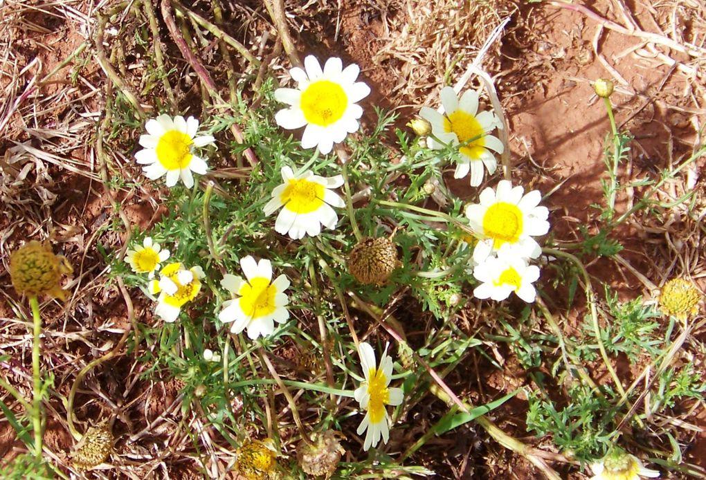 Mes photos prises lors de mes promenades dans ma ville ou ailleurs, fleurs des champs, roses, plantes, arbres...